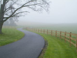 Misty Driveway Photographic Print by John Churchman