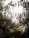 Reeds Reflecting on Lake Surface Photographic Print by Claire Morgan