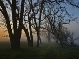 Moody Wood Scene of Silhouetted Trees and Mist Photographic Print by Diane Miller