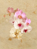 Pink and White Flowers on a Textured Surface Photographic Print by Diane Miller