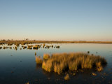 Flooded Salt Pans and Grasses in Makgadikgadi Photographic Print by Beverly Joubert