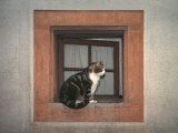 Cat Sitting on a Window Ledge Photographie par Diane Miller