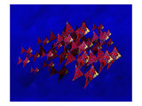 School of Blue Stripe Angel Fish Giclee Print by Rich LaPenna