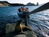 Tourists Coming Ashore Near an Endangered Galapagos Sea Lion Photographic Print by Mattias Klum