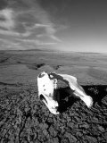 Close View of a Horse Skull in the Desert Photographic Print by David Edwards