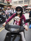 Woman Riding on Her Scooter with Her Small, Pampered Dog Photographic Print by  xPacifica