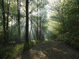 Sunbeams Cut Through the Morning Mist on a Country Road Photographic Print by George Grall