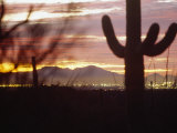 Cacti Silhouetted at Dusk as the Sun Sets Behind Mountains in Arizona Photographic Print by  xPacifica