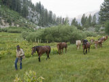 Man Leads Horses Through King Canyon National Park Photographic Print by Joel Sartore
