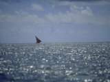 Large Dhow Sails Off the Coast of Pate Island Photographic Print by Michael S. Yamashita