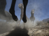 Wild Horses Kick Up Dirt as They Gallop Through the Dry Nevada Desert Photographic Print by Melissa Farlow