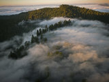 Coastal Fog Covers Humboldt Redwoods State Park Photographic Print by Michael Nichols