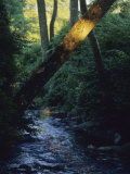 Gentle Rock-Strewn Stream in a Woodland Setting Photographic Print by Raymond Gehman