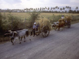 Ox Carts on the Road Between Tehuantepec and Juchitan, Oaxaca, Mexico Photographic Print by Kent Kobersteen