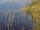 Marsh Grass Along the Shoreline Photographic Print by  xPacifica