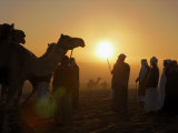 Sunrise Brings Early Competitors to the Camel Beauty Contest Photographic Print by Randy Olson