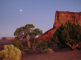 Moon Rise over a Juniper Tree (Juniperus Osteosperma) Ne Arizona Photographic Print by Scott Sroka