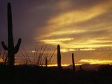 Dusk Descends over Cacti in the Arizona Desert Photographic Print by  xPacifica