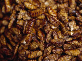 Insect Larvae Sold at a Market for Food and Snacks Photographic Print by  xPacifica