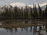 Mentasta Mountains, Alaska Photographic Print by Michael S. Quinton