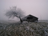 Barn and Ice Covered Tree on Greenwood Hill, New York Photographic Print by Scott Sroka