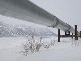 Alaska Pipeline, Alaska Photographic Print by Michael S. Quinton
