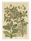 Oak Tree Reprodukcje autor M.P. Verneuil