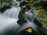 Close-up of Flowing Stream with Fall Leaves on Frosty Morning Photographic Print by Roy Toft