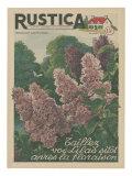 Plantez des Lilacs Láminas