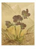 Alpine Florals I Giclee Print by  Vision Studio