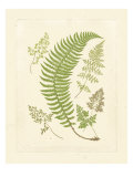 Ferns with Platemark IV Posters
