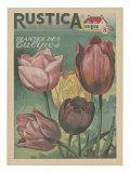 Plantez des Tulipes Posters