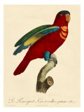 Barraband Parrot No. 95 Premium Giclee Print by Jacques Barraband