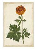 Vibrant Botanicals V Posters