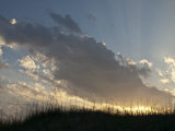Grassy Sand Dunes in the Evening Light Photographic Print by Stacy Gold