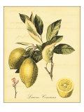 Petite Tuscan Fruits II Posters af Vision Studio