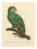 Barraband Parrot No. 110 Poster di Barraband, Jacques