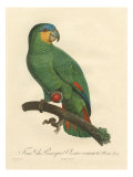 Barraband Parrot No. 110 Giclee Print by Jacques Barraband