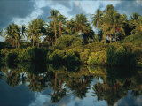 Palm Trees are Reflected on the Water Surrounding Pate Island Photographic Print by Michael S. Yamashita