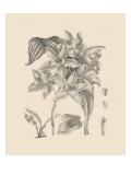 Orchid on Khaki IV Giclee Print by Samuel Curtis