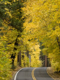 Road Through a Forest with Golden Autumn Leaves Photographic Print by Richard Nowitz