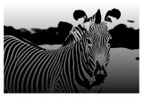 Zebra Chrome II Prints by Susann & Frank Parker