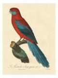 Barraband Parrot No. 78 Stampa giclee premium di Barraband, Jacques