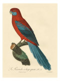 Barraband Parrot No. 78 Giclee Print by Jacques Barraband