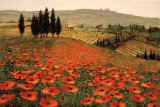 Bjerge i Toscana I Posters af Steve Wynne