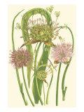 Summer Garden VI Premium Giclee Print by Anne Pratt