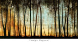 Golden Forest Print by Carolyn Reynolds