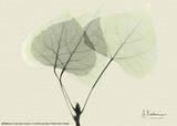 Aspen Leaves Kunstdruck von Albert Koetsier