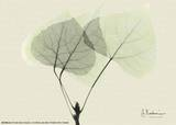 Aspen Leaves Print by Albert Koetsier