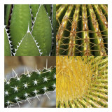 Prickles Print by Susann & Frank Parker